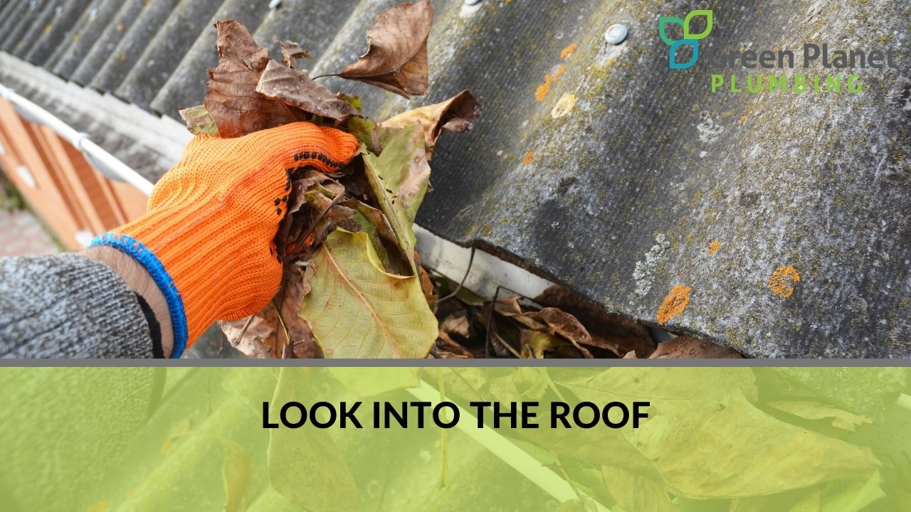 Look Into the Roof